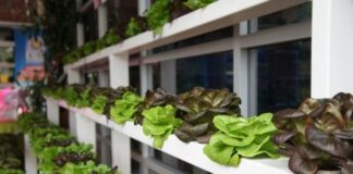 hydroponic gardening and benefits space travel